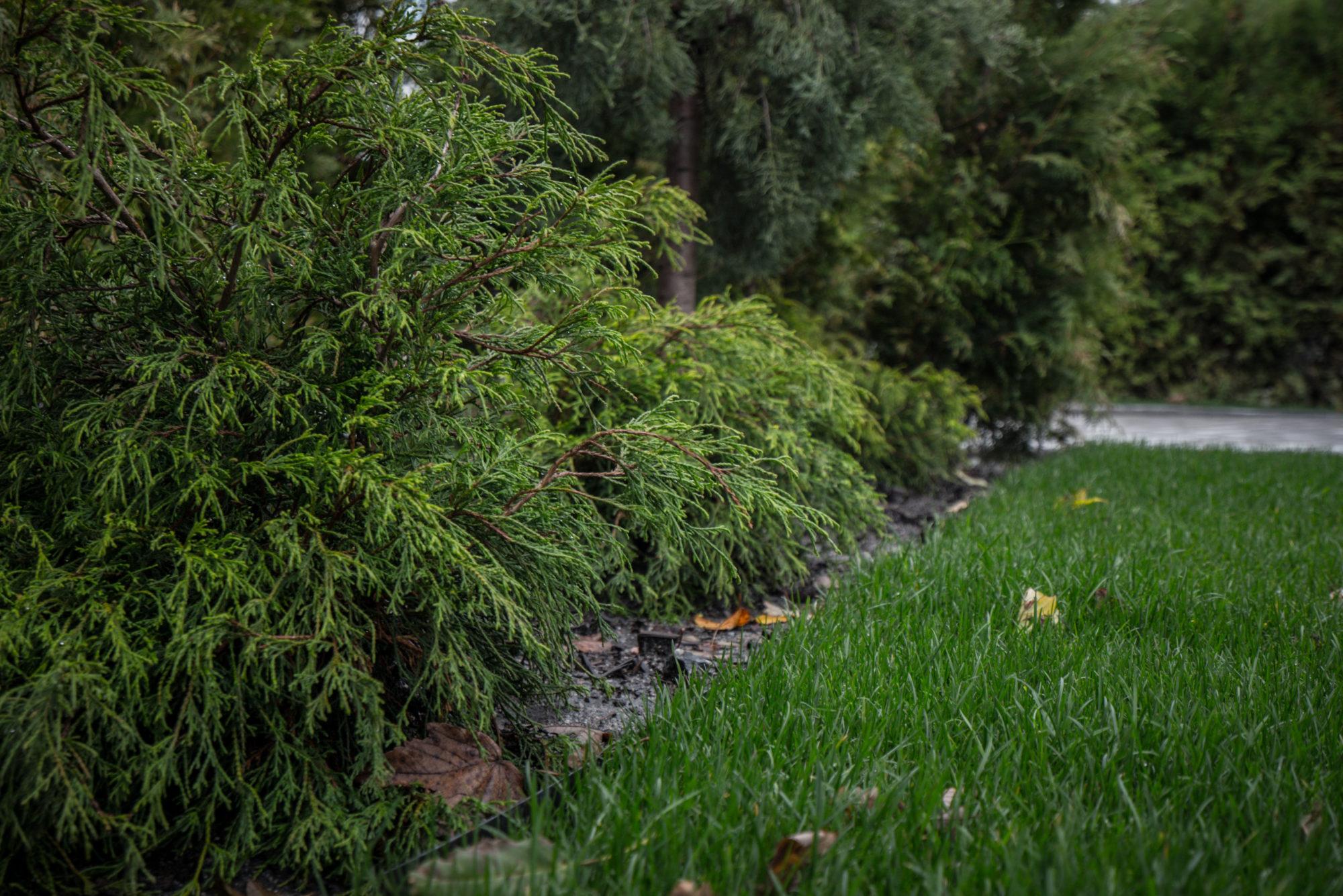 Løvind beplantning busker